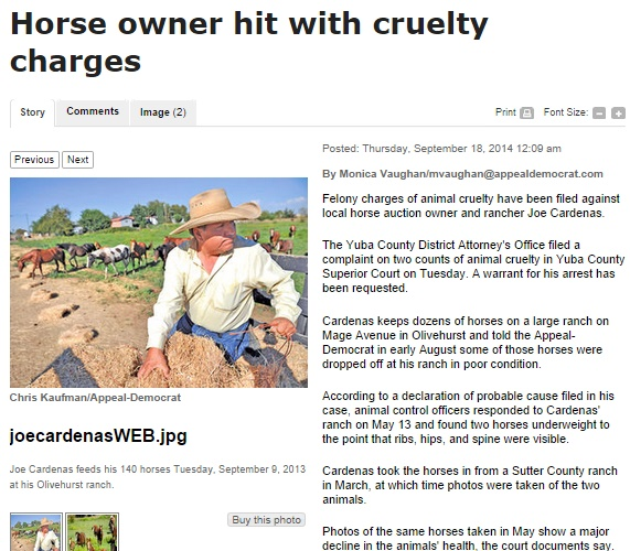 Horse Auction Owner Charged With Felony Animal Cruelty