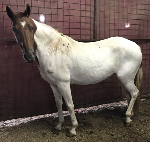 Meet all the horse rescued from slaughter pipeline – Horse Plus