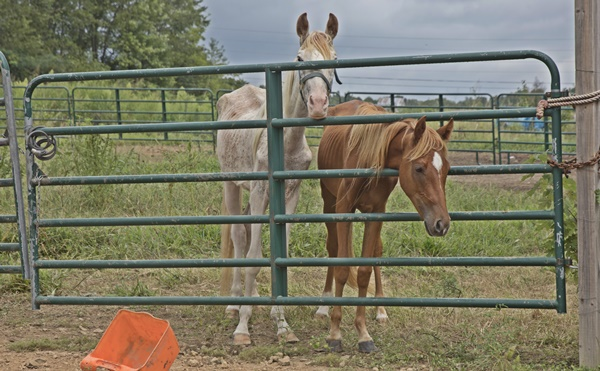 What a Week! – Horse Plus Humane Society