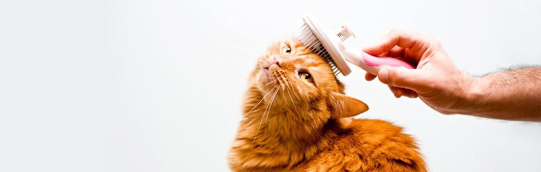 Cut The Crap Pet Services-cat-grooming