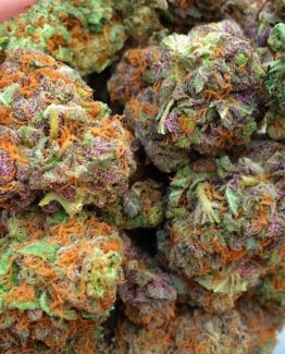 Clones For Sale | Marijuana Nursery | Buy Clones Online