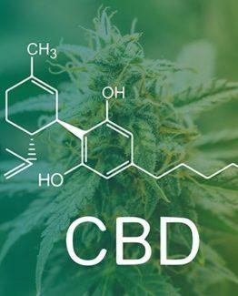 Clones For Sale | Clones for sale online | Marijuana Plants