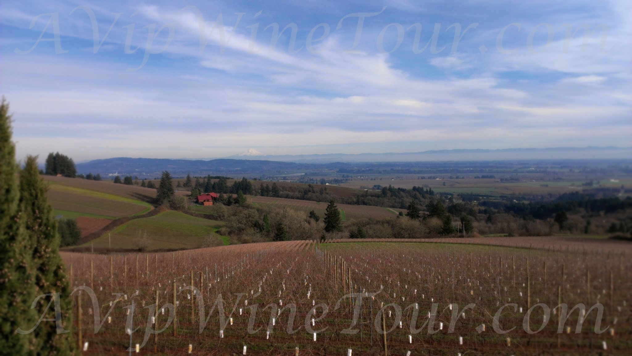 VIPS_WineTour_1_Edit_WaterMark_2_15