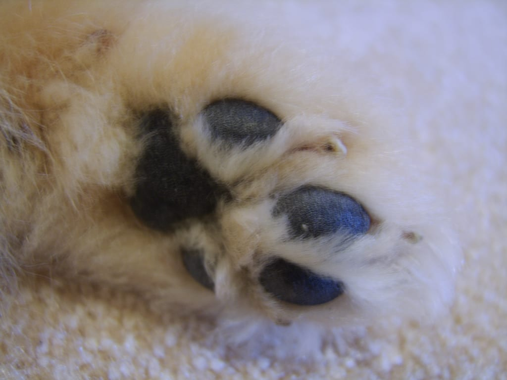 pomeranian dog cute photography (47)