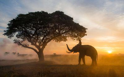 training the elephant