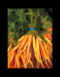 Lisa Foster: Carrots-At the Market