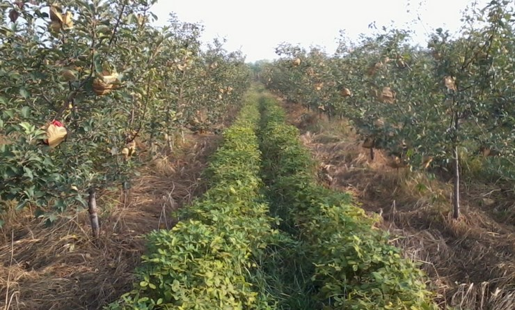 Intercropping: A common farming practice in Rural China