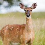 Colorado Department of Wildlife Violations