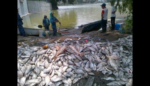 peces-muertos-Molina