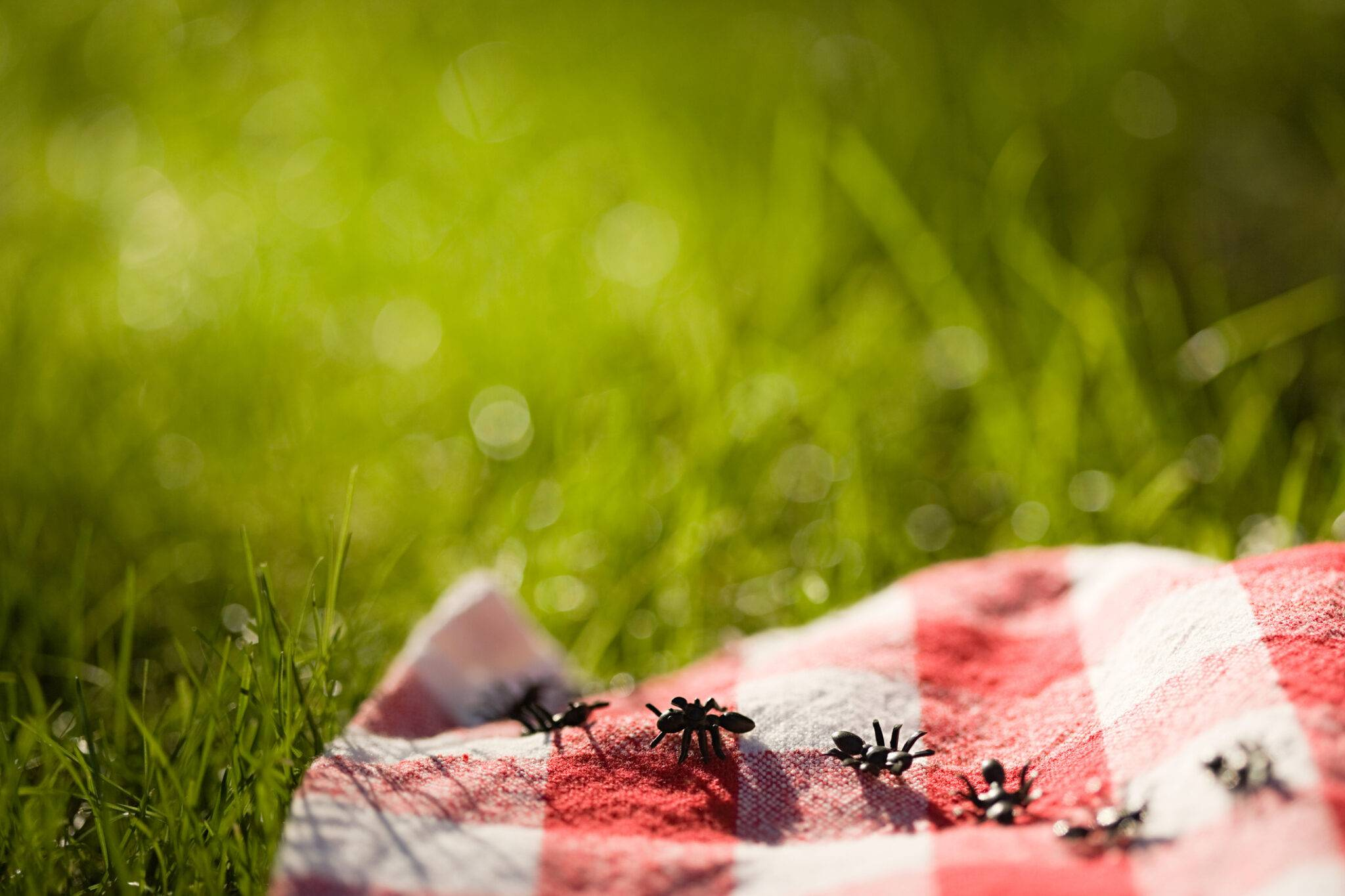 Insect & Pest Services