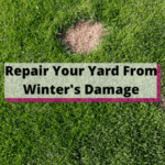 Repair Your Yard From Winter's Damage