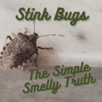 Stink Bugs – The Simple Smelly Truth and 10 Ways to Stop Them