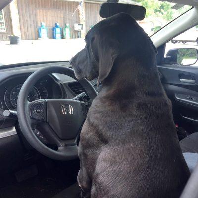 Luke driving his car