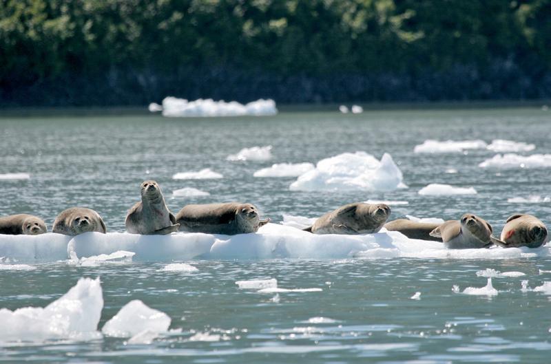 Sunbathing in Alaska