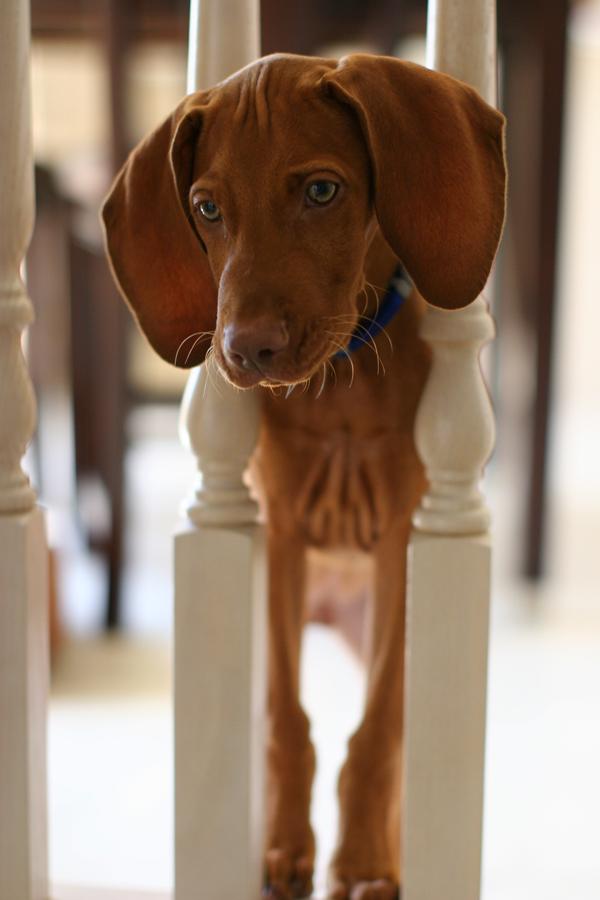 Puppy Come Here