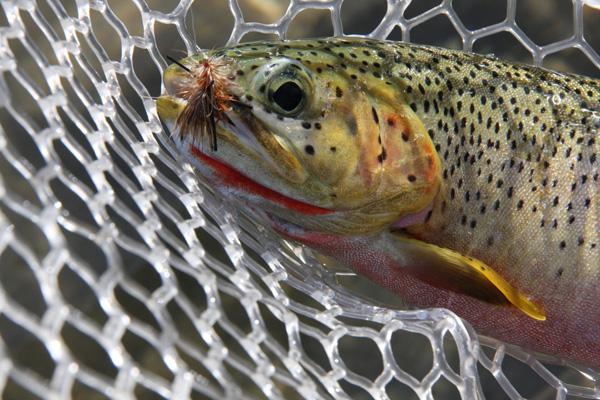 Fishing the Flathead River In Montana