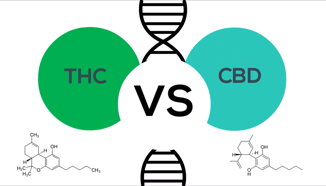 The Genetics of THC and CBD