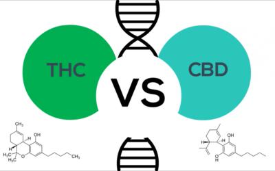 The Genetics of THC and CBD