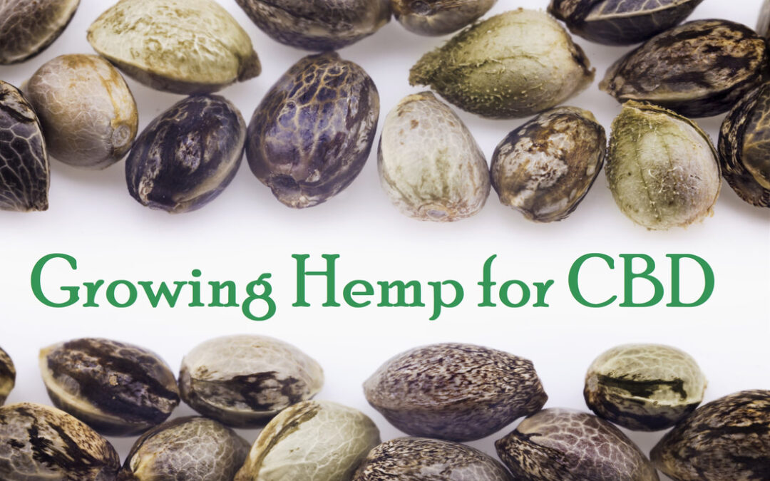 How to Grow Hemp for CBD