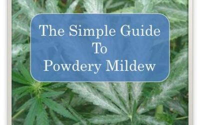 Guide To Powdery Mildew Treatment