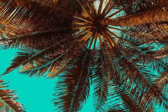 trees-3619180_640