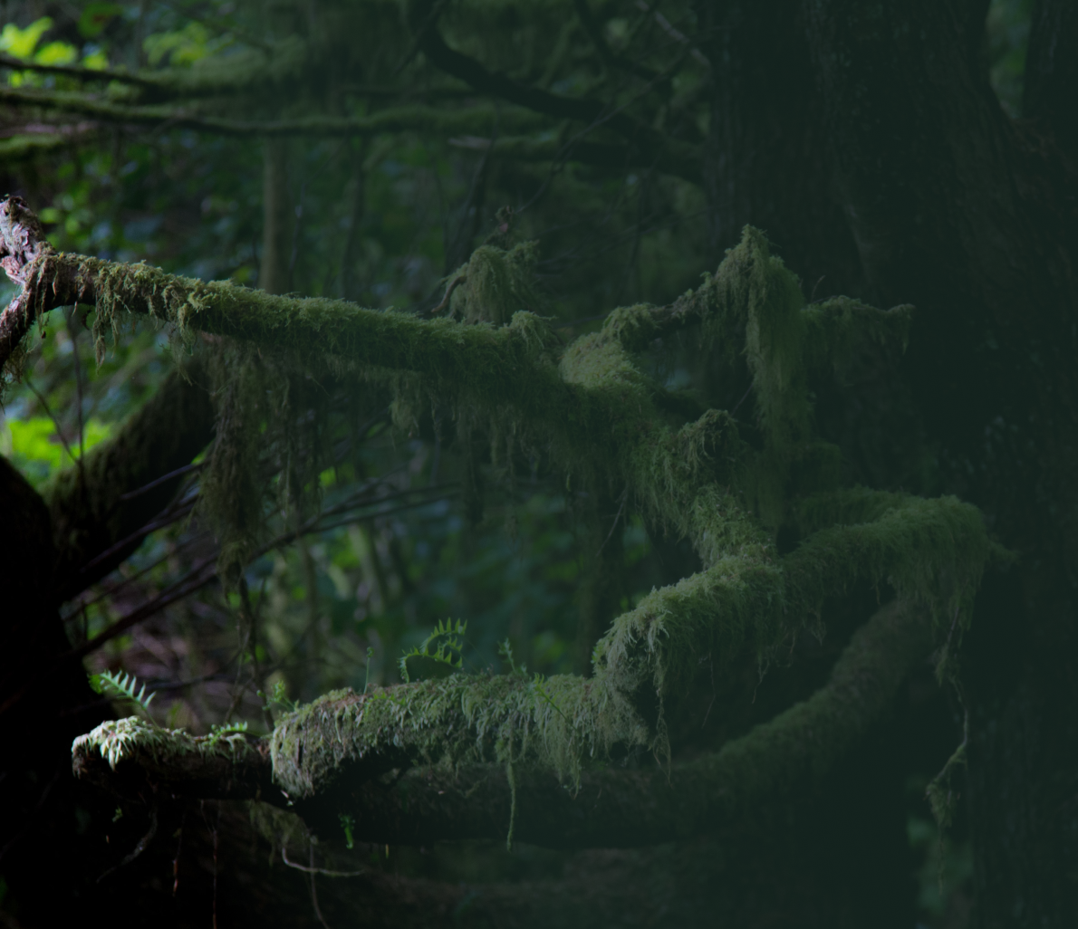 Trees Mossy Background