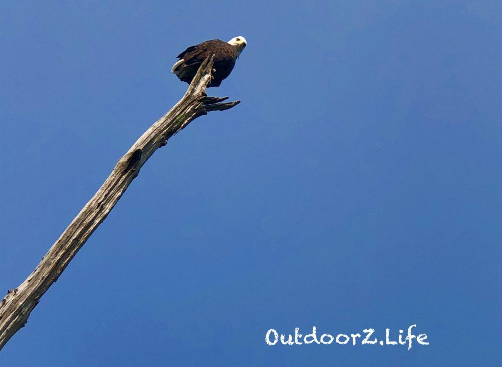 OutdoorZ.Life Merrill Creek Eagle