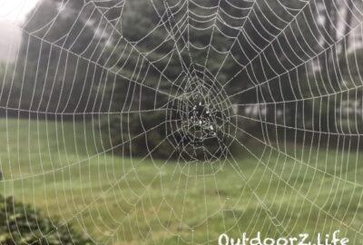 Outdoorzlife, Spider Web