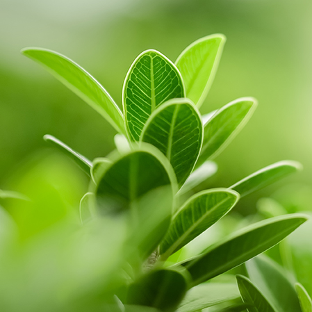 Close up of nature view green leaf on blurred greenery background