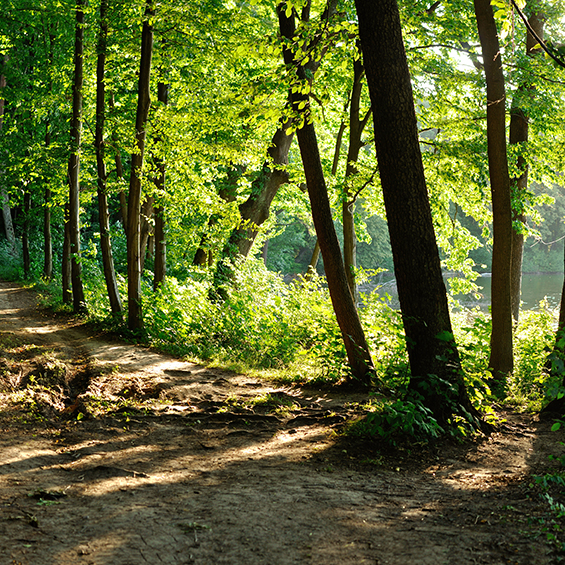 A forest trail at dusk