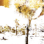 Elixir | 40 x 30 in | Available - Sorrel Sky Gallery, Santa Fe NM