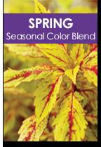 Spring Seasonal Color Blend Cover