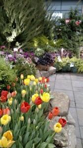 A peek into Unique Environmental's garden.