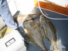 Halibut Fishing Charter