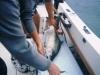 Salmon Fishing Charter