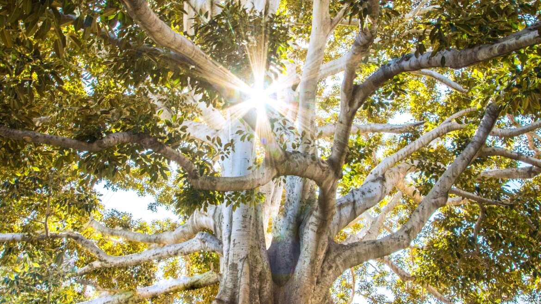 Trinity's Roots