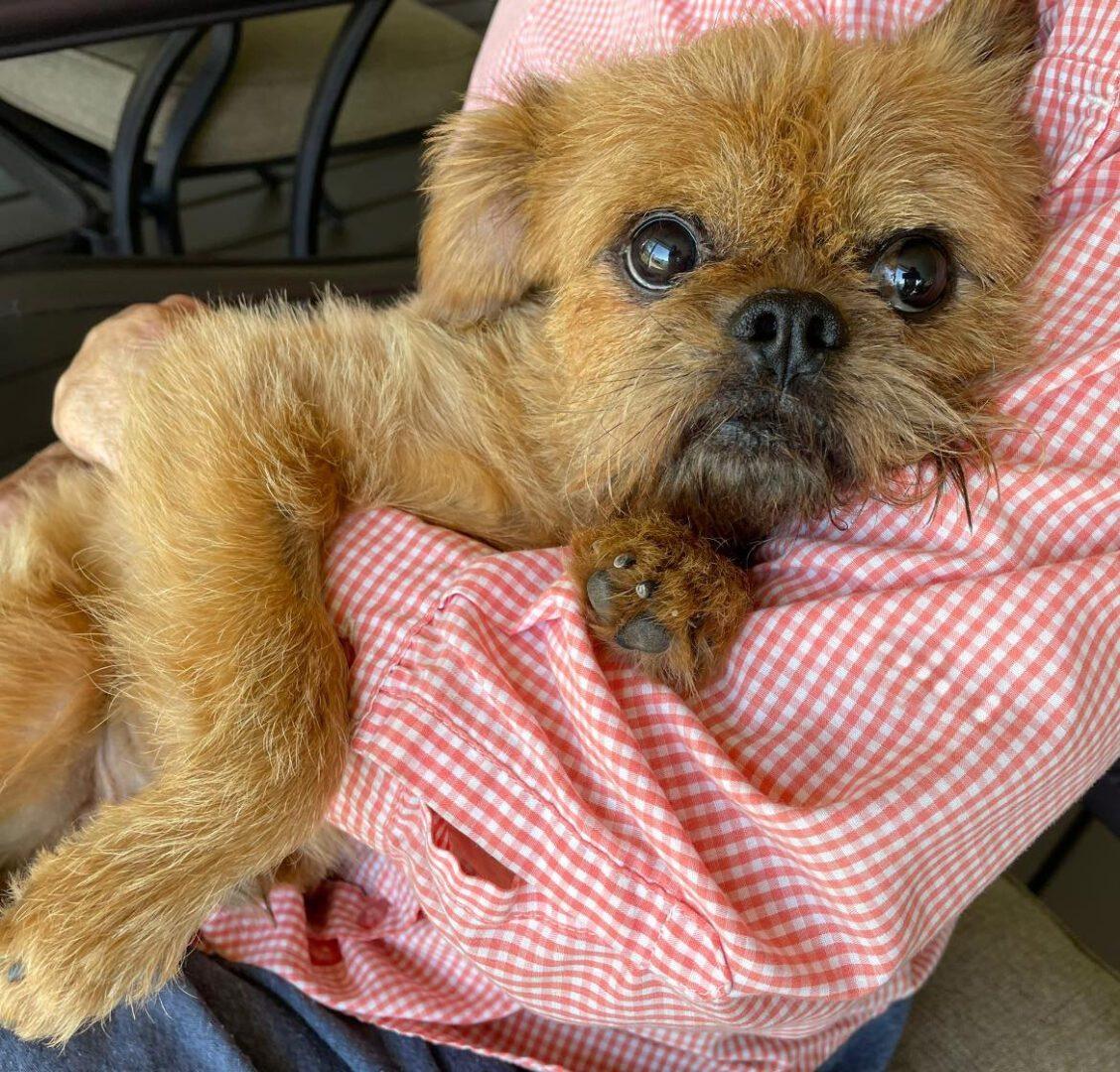 Brownie 3648 Florida Adopted 9-6-2021