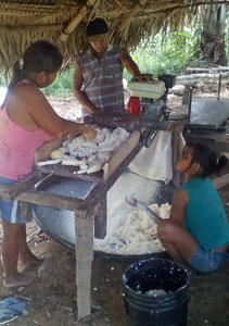 shredding yuca to make farina