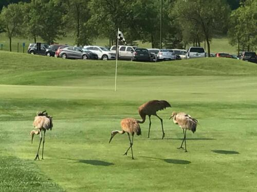 Cranes Twin Cities Rubber Group 2017 Golf Outing