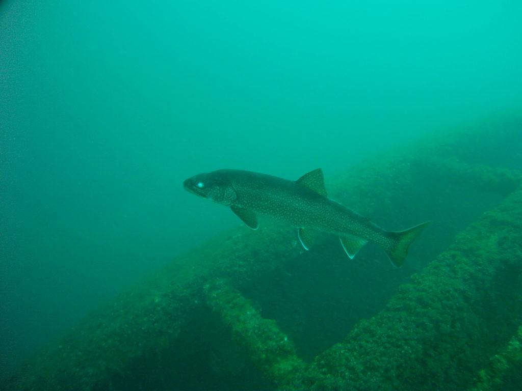 Prins Willem V Shipwreck 1