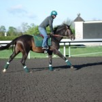 Keeneland Race Course in Lexington morning workouts
