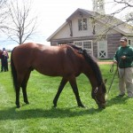 2008 Kentucky Derby winer Big Brown grazing
