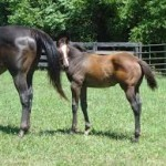 Another mare and colt at Claybank Farm