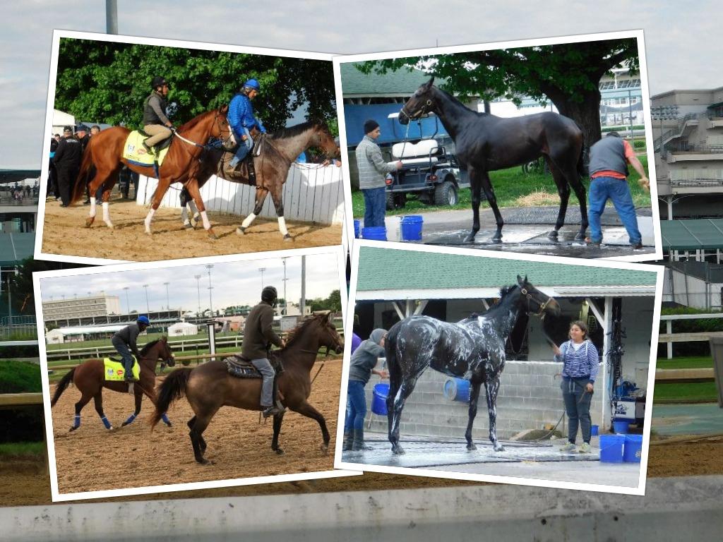 D 2 A day 2 horse bath
