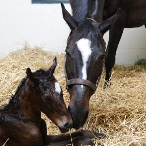 Zenyatta with her May 2017 filly