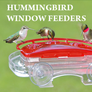 Hummingbird Window Feeders