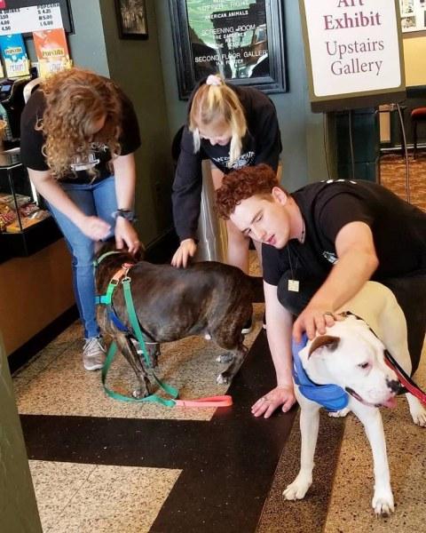 Grandin-Theater-dog-training