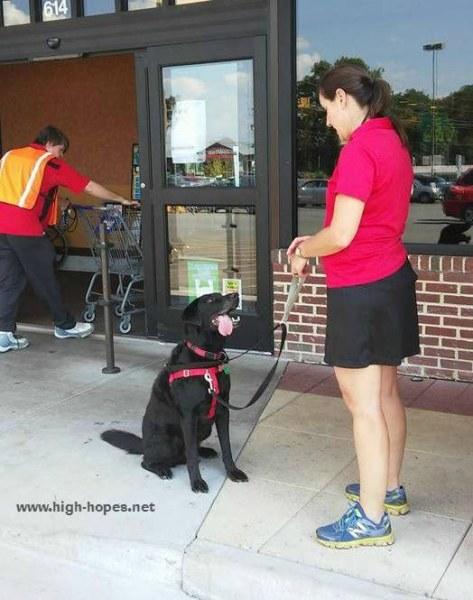 Stout-service-dog-in-training-Kroger