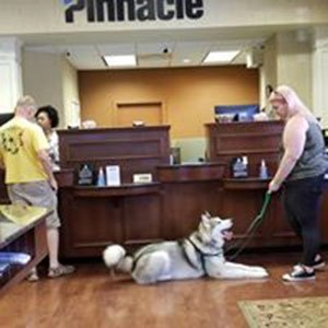 well-trained-dog-in-store