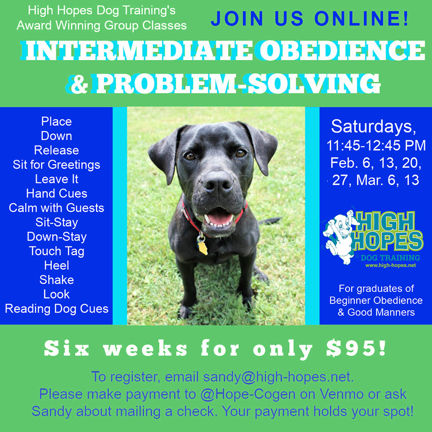 Intermediate Dog Obedience Class ad